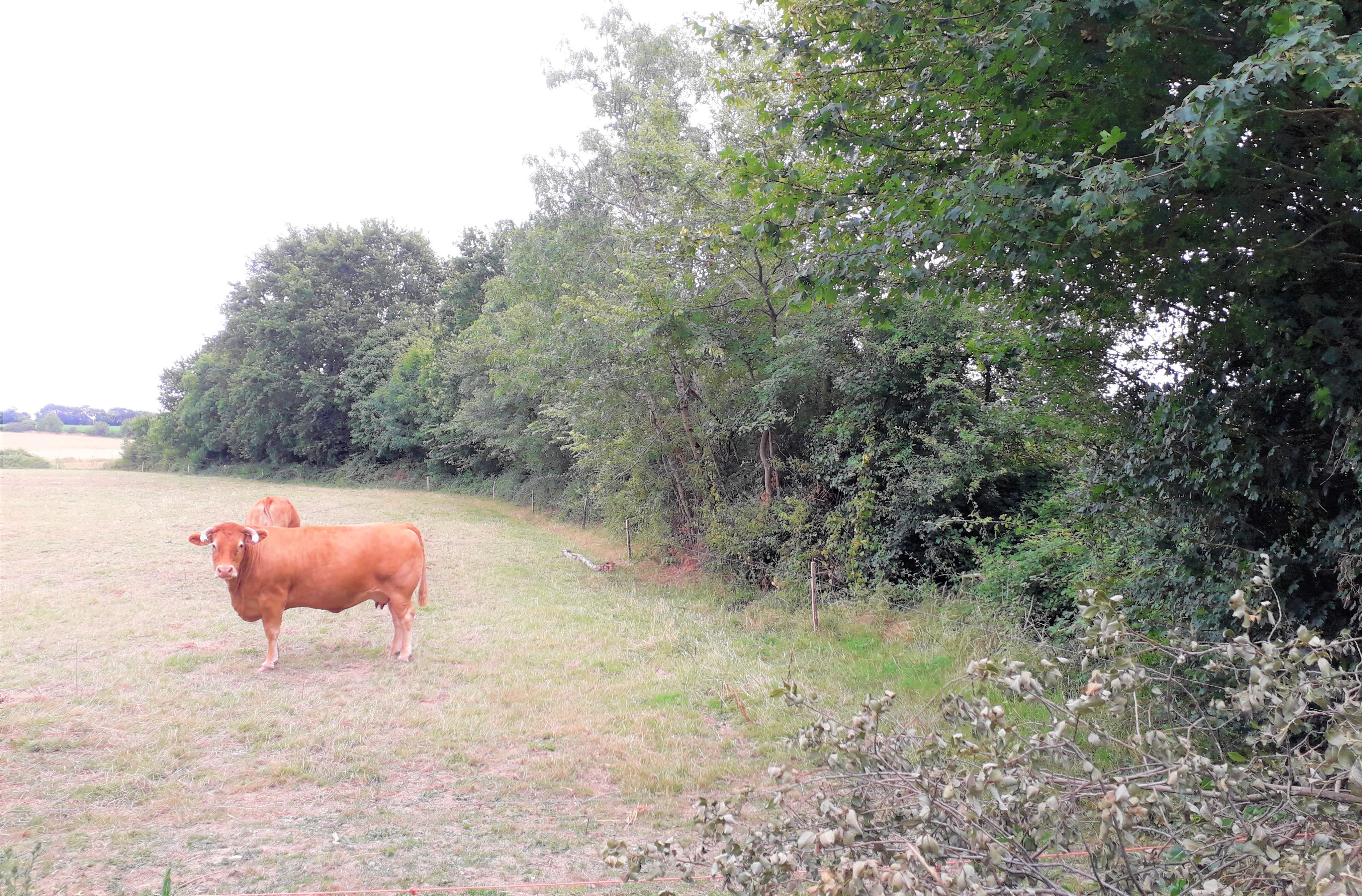 http://www.bassindulay.fr/uploads/images/slider/AM.Bocage_et_bovinv3.jpg